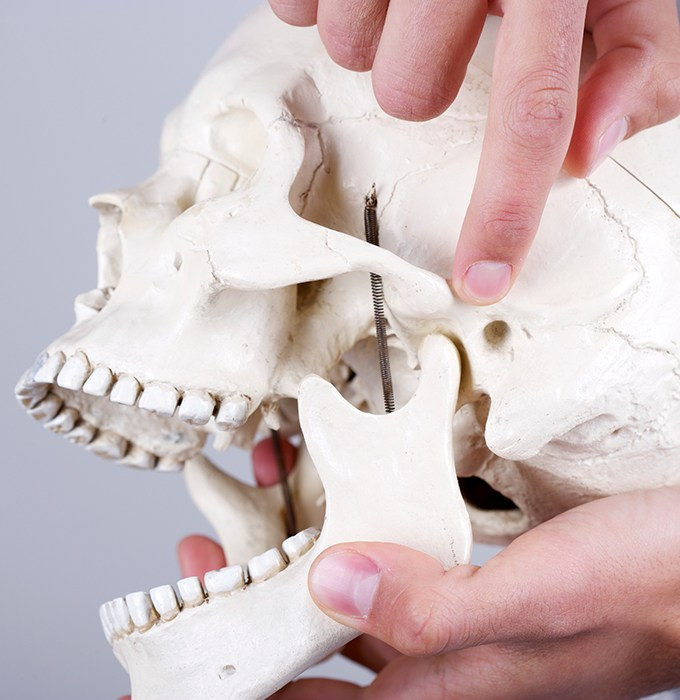 Model of jaw and skullbone used for T M J diagnosis and treatment planning
